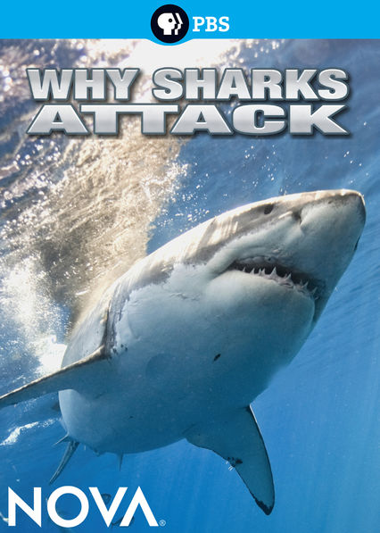 Why Sharks Attack