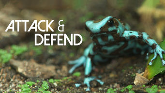 Attack and Defend (2015)